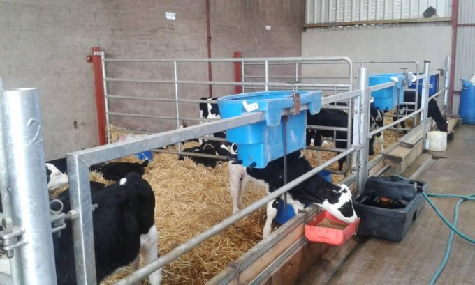 Dairylink: Fertility management and using the right genetics are key to better fertility
